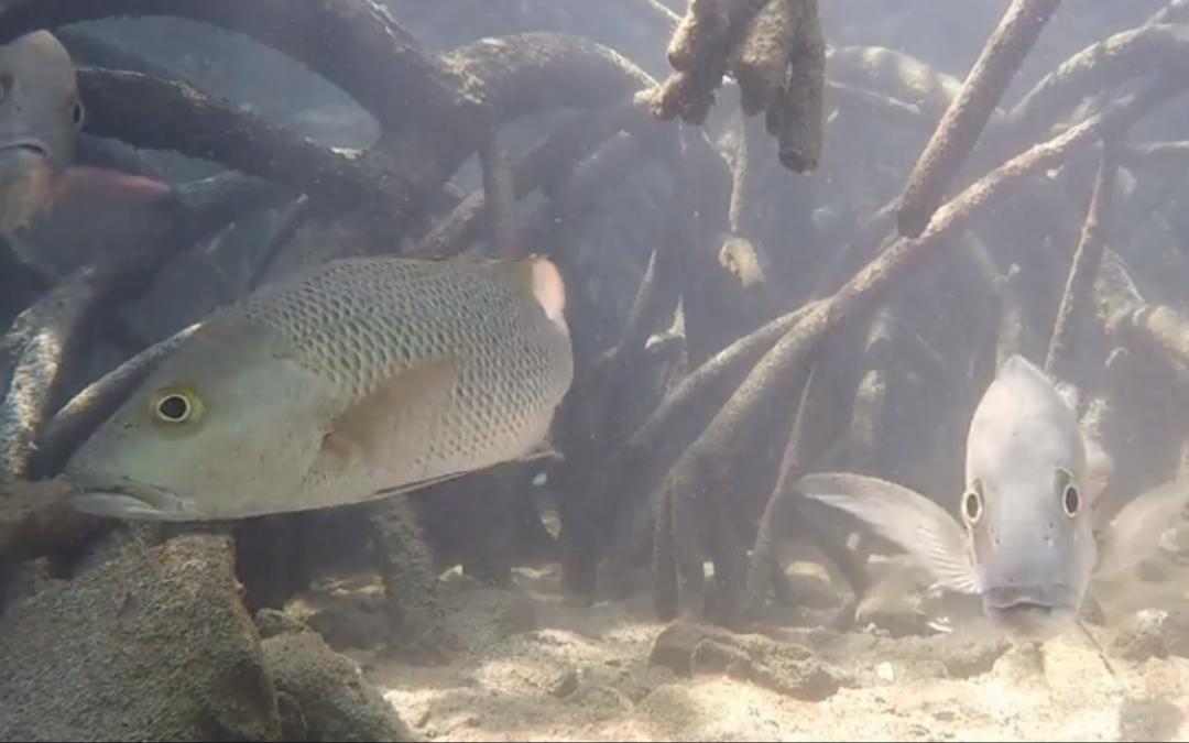 Darwin rec fishers look underwater to protect fish habitat